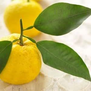 九州産 柚子(1個)