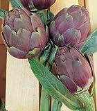 【PLANT】Heirloom Artichoke Violetto Chioggia エアルーム・アーチチョーク(アーティチョーク)・ヴィオレット・チオギア(2苗)