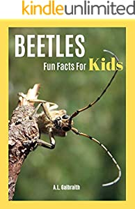 Beetles Fun Facts For Kids : Reading & learning animal photo children book (Bug World 1) (English Edition)