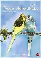 Wellensittiche 2020 - Kalender A4