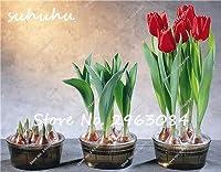ホット販売!100ピースレアミニチューリップ種子カラフルな花の種高級花盆栽種子ミニ盆栽植物用ホームガーデン