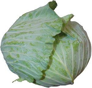 九州産 キャベツ(きゃべつ)  1玉 九州の安心・安全な野菜! 【福岡・熊本・大分・佐賀】