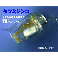 タマミジンコ 400ml(100匹以上)+ミジンコ増殖餌2種20g