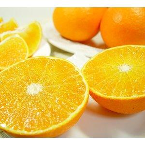 愛媛県産 高級柑橘 紅まどんな 8個 (1個:300g前後) 化粧箱入り【12月上旬より発送開始予定】