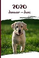 Kalender 2020: Labrador Retriever Hunde Tageskalender 1. Halbjahr Januar Juni ca DIN A5 weiss ueber 190 Seiten
