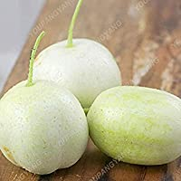 キュウリの種を植えるホームガーデンのホーム種子野菜の種のPLAT会社-200個超レア黒キュウリ日本のロングキュウリ種子野菜の種