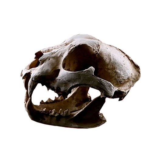 MIRAIS アニマル 化石 迫力 リアル 4種 ヒョウ イヌ ダチョウ シロクマ 動物 コレクション (ヒョウ) MR-ANIKASE-1