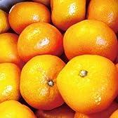 【糖度11度以上】ミカちゃんマークの「静岡:三ケ日青島みかん」【優グレード】MまたはLサイズ 10kg