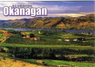 ポストカード オカナガン ワインのふるさと一面のブドウ畑