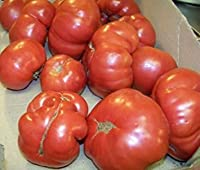トマト、ラトガース、家宝、87個の種子