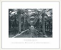 ポスター アンセル アダムス Palm Grove 1966 額装品 ウッドベーシックフレーム(ホワイト)