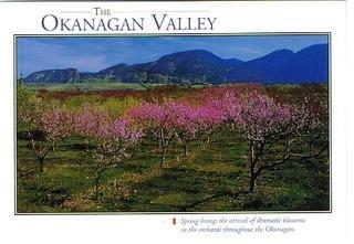 ポストカード オカナガン ワインの故郷 オカナガンバレー