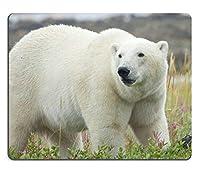 チャーチルマニトバ州の近くのハドソン湾のカラフルな北極ツンドラを歩くカナダのホッキョクグマImage ID 23269904