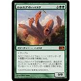 MTG [マジックザギャザリング] カロニアのハイドラ[神話レア] /M14-181-SR シングルカード