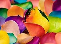 カラフルな花の花びら Colourful flower petals Painting silk fabric poster シルクファブリックポスター 44cm x 33cm