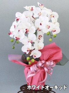 山久 優雅で高貴な 胡蝶蘭 鉢植 三本立 ホワイトオーキッド...