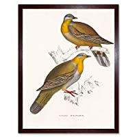 Painting Birds Himalayas Gould Yellow Foot Green Pigeon Art Print Framed Poster Wall Decor 12X16 Inch ペインティング鳥黄緑ポスター壁デコ