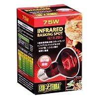 ジェックス ヒートグロー赤外線照射ランプ 75W PT2142 【ペット用品】 ds-1412231