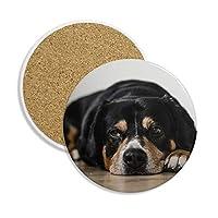 犬ペット動物写真床図セラミックコースターカップマグホルダー吸収性ストーンDrinks 2個のギフト