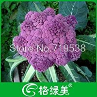 紫cauli花盆栽20枚