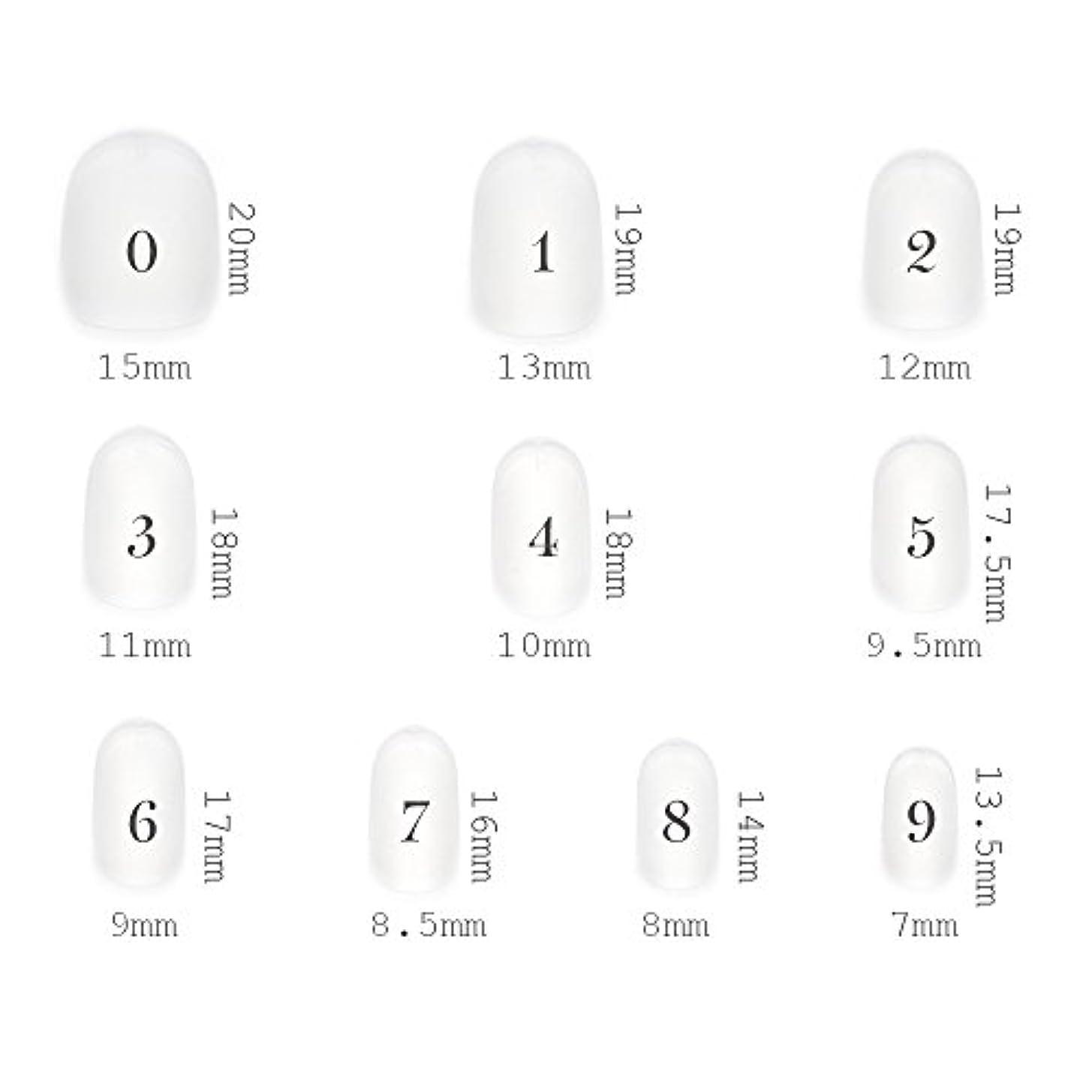 直立永続屋内でショートラウンド型 クリアネイルチップ サンディング加工なし 透明 500枚入り 10サイズ各50枚