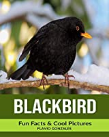Blackbird: Fun Facts & Cool Pictures