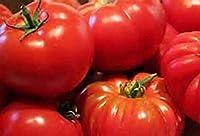 発芽SEEDS:大きな赤いトマトの種子50