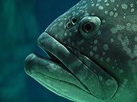 Lais Puzzle 魚 2000 部
