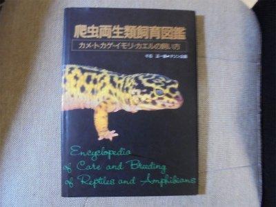 爬虫両生類飼育図鑑―カメ・トカゲ・イモリ・カエルの飼い方の詳細を見る