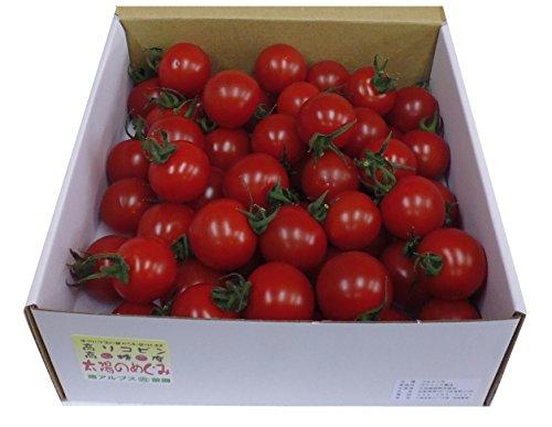 太陽のめぐみ フルティカ 高糖度フルーツトマト (無選別1kg)