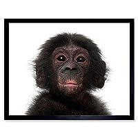 Photo Animal Bonobo Chimp Chimpanzee Baby Young Art Print Framed Poster Wall Decor 12X16 Inch 写真動物赤ちゃん若いポスター壁デコ