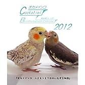 オカメインコ鳥写真カレンダー2012