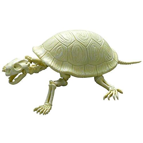ポーズスケルトン 爬虫類両生類No.202 ゾウガメ