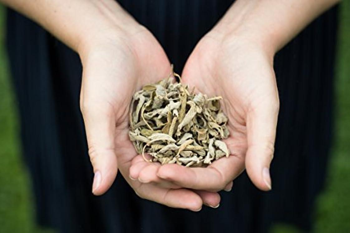 白いアリスアラスカ12 Sage Incense Cones - All Natural Hand Rolled Herbal Incense [並行輸入品]