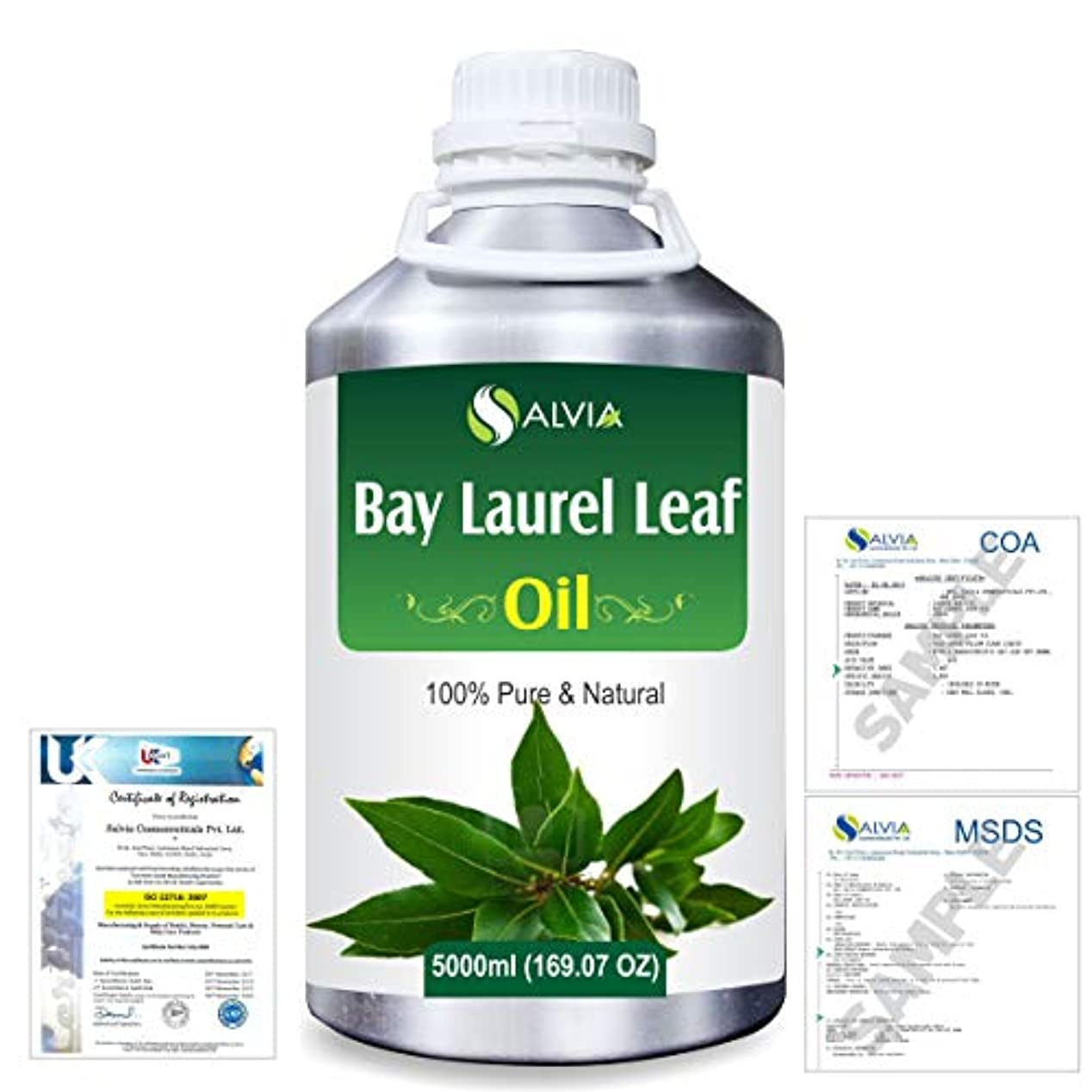 絶対に満州デイジーBay Laurel Leaf (Laurus nobilis) 100% Natural Pure Essential Oil 5000ml/169fl.oz.
