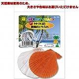 三晃商会 ヤドカリ用エサ皿 オカヤドカリの貝がらエサ入れ 2枚入り 【アソート(天然素材使用のため、大きさや色味はお選びいただけません)】
