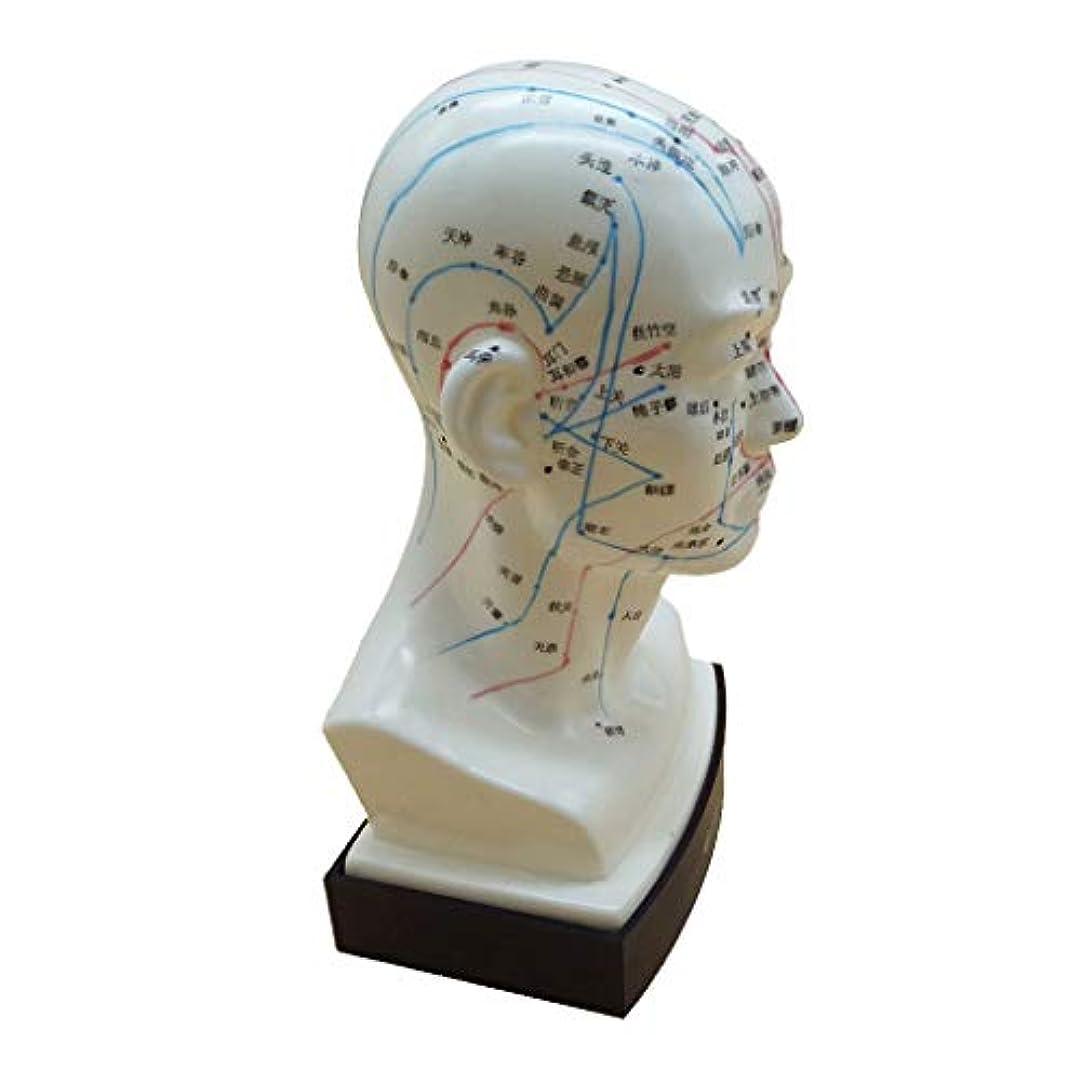 嫌な読書重々しいマッサージ モデル 中国語 指圧ポイント 人間の頭 経絡モデル