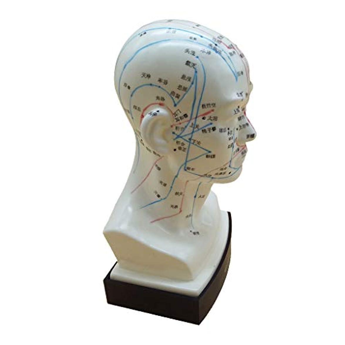 起きてネーピア口KESOTO マッサージ モデル 中国語 指圧ポイント 人間の頭 経絡モデル