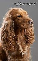 English Cocker Spaniel: Diskretes Passwort Buch | 109 Seiten | Fuer 432 Eintraege | Webseite, Benutzername, Passwort und Notizen | 12,7 cm x 20,3 cm Taschenbuch | Internet Security | Organizer | Notizbuch | Hund