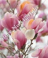 販売! 50個/袋盆栽マグノリアの花、美しい樹木植物、簡単にホームガーデンDIY観葉植物 のための成長:23
