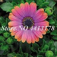 Ing簡単に育てホームガーデンの種子50個の種子デイジー種子アウトドア菊の花の美しいフロールの種子を:3