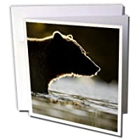 Danita Delimont–Bears–アラスカ、カトマイ国立公園、Grizzly Bear–us02pso1294–ポール・Souders–グリーティングカード Individual Greeting Card