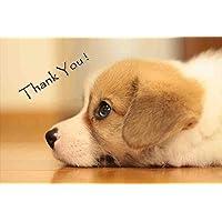 【犬のポストカードAIR】「Thank You 」 英語でありがとうごを伝える犬の葉書・はがき・ハガキ