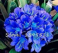 1bag = 100個安いクンシラン属の種、クンシラン属鉢植えの種子、盆栽家のバルコニー&ガーデン