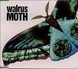 WALRUS MOTH