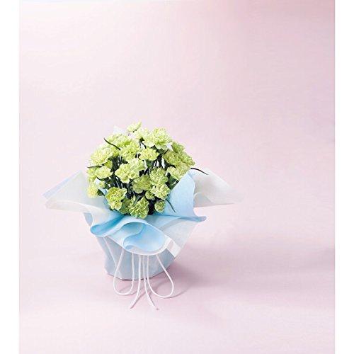 母の日ギフト 花 プレゼント 人気 ランキング 早割 大人気 数量限定 グリーンカーネーション鉢植え スフェン 60代 70代 80代 もらって うれしい メッセージカード iprsad