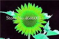 30個のミニヒマワリの種花、虹ヒマワリの花、ホームガーデン装飾用の種子屋内種子花の種子:23