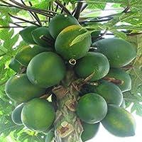 PLAT会社-SEEDSメロンツリーメキシコジャイアントカリカパパイヤバルク100個の種子