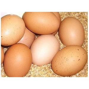 こだわりの平飼い有精卵(たいようの幸せたまご)10個※運動たっぷりの平飼い鶏から生まれた元気な卵です!※常温便