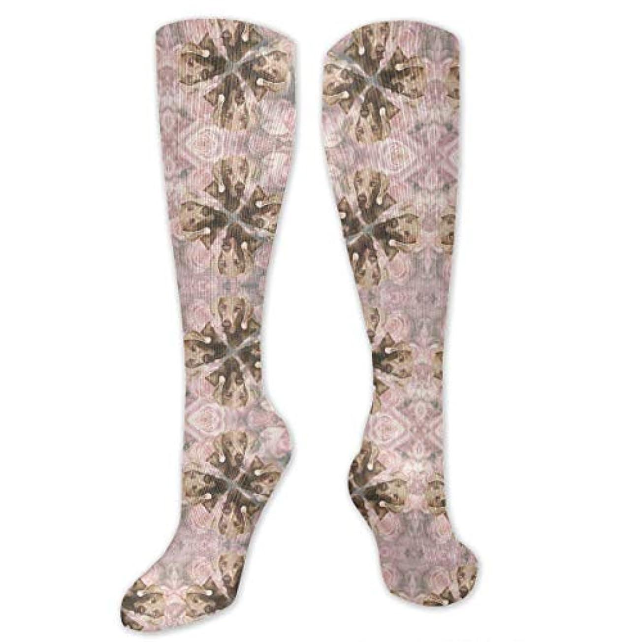 アシュリータファーマンジムファイル靴下,ストッキング,野生のジョーカー,実際,秋の本質,冬必須,サマーウェア&RBXAA Roses Weimaraner Wallpaper Socks Women's Winter Cotton Long Tube Socks...